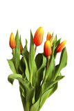 Bouguet of tulips Stock Photography