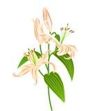 Bouket del fiore del giglio Immagini Stock Libere da Diritti