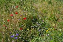 Bouket dzicy kwiaty w polu zdjęcie royalty free