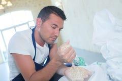 Boulanger beau vérifiant la qualité de céréale photos stock