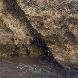Boulder überwuchert mit Miesmuscheln stockfotografie