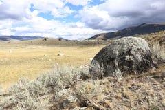 Boulder in Brushland Immagine Stock