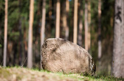 The boulder on the edge of the forest. The boulder is of irregular shape on the edge of the forest Royalty Free Stock Photography
