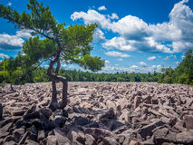 Boulder field in Hickory Run State Park Royalty Free Stock Photos