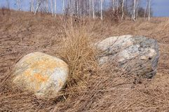 Boulder in the field in the spring Royalty Free Stock Image