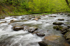 Boulder filled stream in forest. Stock Photo