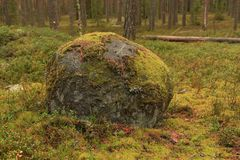 Boulder in a forest Royalty Free Stock Photos