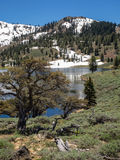 Mountain lake with trees and snow Royalty Free Stock Image