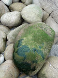 Boulder and moss. Moss, algae and greens on a boulder, on the french coastline near Brest, France Stock Photos