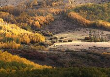BOULDER MT, UT - 2016-09-30 fall color -01c Royalty Free Stock Images