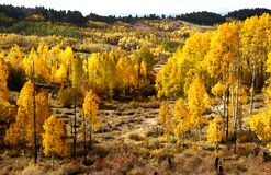 BOULDER MT, UT - 2016-09-30 fall color -15a Stock Photo