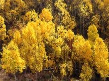 BOULDER MT, UT - 2016-09-30 fall color -22b Stock Photo