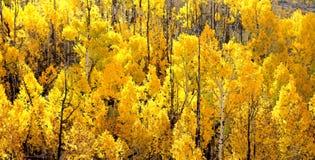 BOULDER MT, UT - 2016-09-30 fall color -24b Royalty Free Stock Images