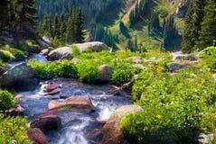 Boulder-Nebenfluss umgeben durch Sommer Wildflowers Lizenzfreies Stockfoto
