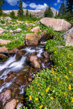 Boulder-Nebenfluss umgeben durch Sommer Wildflowers Stockbilder