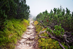 Boulder road to High Tatra mountains Stock Image