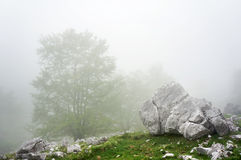 Boulder and rocks in foggy forest Royalty Free Stock Image
