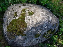 Boulder stone covered with moss. Large boulder covered with sediments and lichens. Grass and green background around the edges Royalty Free Stock Photos