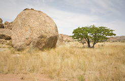 Boulder and Tree Royalty Free Stock Image