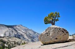 Boulder und Baum in Nationalpark Yosmite Lizenzfreie Stockfotografie