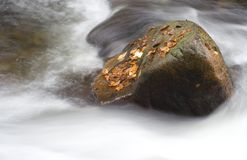 Boulder in a water. Boulder with coloured leaves in a stream Royalty Free Stock Images