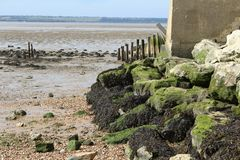 Boulders on Alhallow Beach in Kent. Allhallows Beach on the Thames Estuary Boulders and seaweed on beach Royalty Free Stock Photography