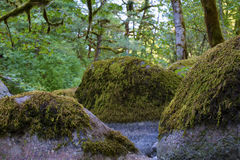 Boulders on the banks of Tanner Creek In The Columbia River Gorge Royalty Free Stock Photos