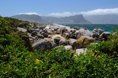 Boulders Beach, Cape Province Royalty Free Stock Image