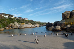 Boulders Beach Royalty Free Stock Photo