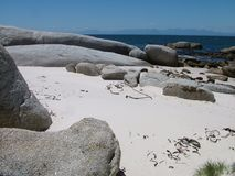 Boulders Beach at Table Mountain National Park. Near Cape Town in South Africa Stock Photography