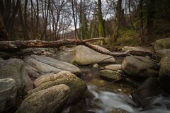 Boulders, Branches, Creek Stock Photography