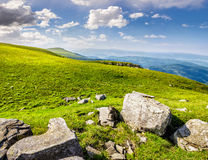 Boulders on the Carpathian hillside. White sharp boulders on the hillside meadow with green grass in high Crapathian mountains Royalty Free Stock Photo