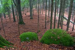 Boulders Covered by Green Moss in Autumn Forest Stock Photography