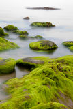 Boulders covered with green seaweed in misty sea. Big boulders at Irish coast covered with green seaweed long exposure makes seawater look like mystery fog Stock Photos