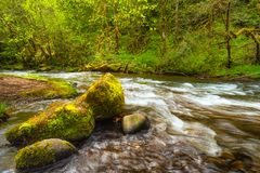 Boulders covered in moss in Scoggins Creek Royalty Free Stock Image