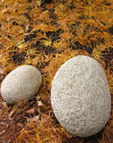 Boulders & Fall Leaves Royalty Free Stock Images
