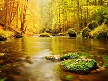 Boulders with fallen leaves. Autumn mountain river. Beeches, maples and birches leaves. Royalty Free Stock Image