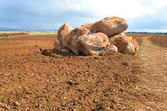 Boulders in the field. Stock Images