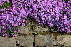 Boulders with flowers Stock Photos
