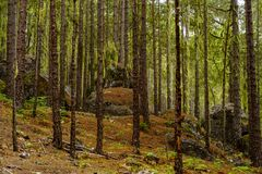 Boulders in the forest of Tamadaba, Gran Canaria, Canary islands. On a foggy day royalty free stock photography