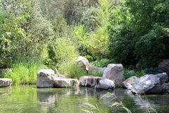 Boulders in the Lake. Boulders line the lake at the Albuquerque zoo Royalty Free Stock Photography