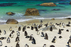 Boulders Penguin Colony Royalty Free Stock Photos
