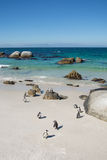 Boulders penquin colony at Simonstown Stock Image