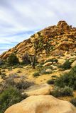 Boulders, red rock formations on the hiking trail in Joshua Tree National Park, California, United States. Sunny summer day Royalty Free Stock Photography