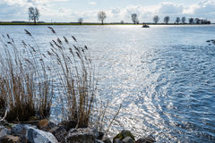 Boulders and reeds on the banks of the river Royalty Free Stock Images