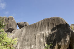 Boulders rocks and leaf coconut palm in La Digue island Seychelles Stock Photography