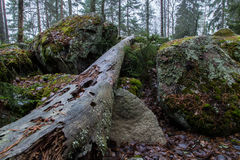 Boulders and a rotten log Stock Image