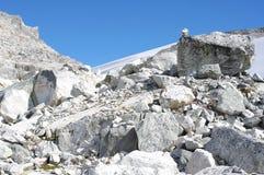 Boulders and rough mountain terrain. On the slopes of Rainbow Mountain near Whistler stock photo