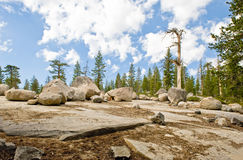 Boulders by scenic forest Stock Photos