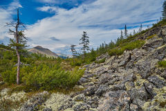Boulders slope of mountain. A taiga in the summer. A stream valley Royalty Free Stock Photography